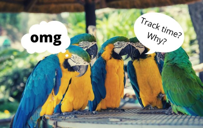 Parrots discussing time tracking